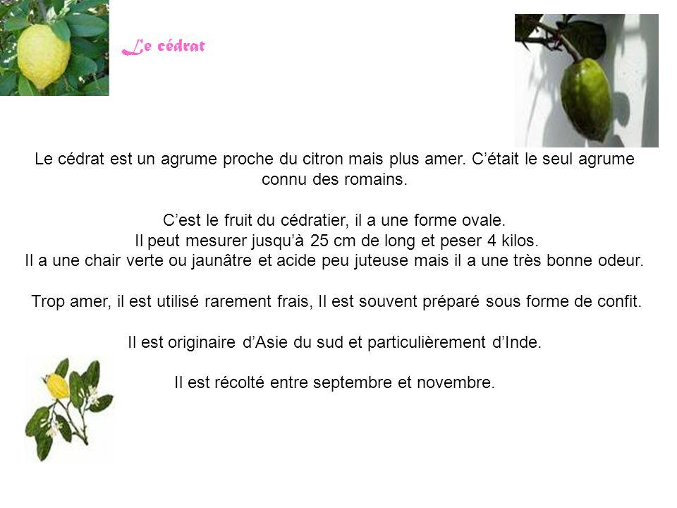 Le cédrat Le cédrat est un agrume proche du citron mais plus amer. C'était le seul agrume connu des romains. C'est le fruit du cédratier, il a une for