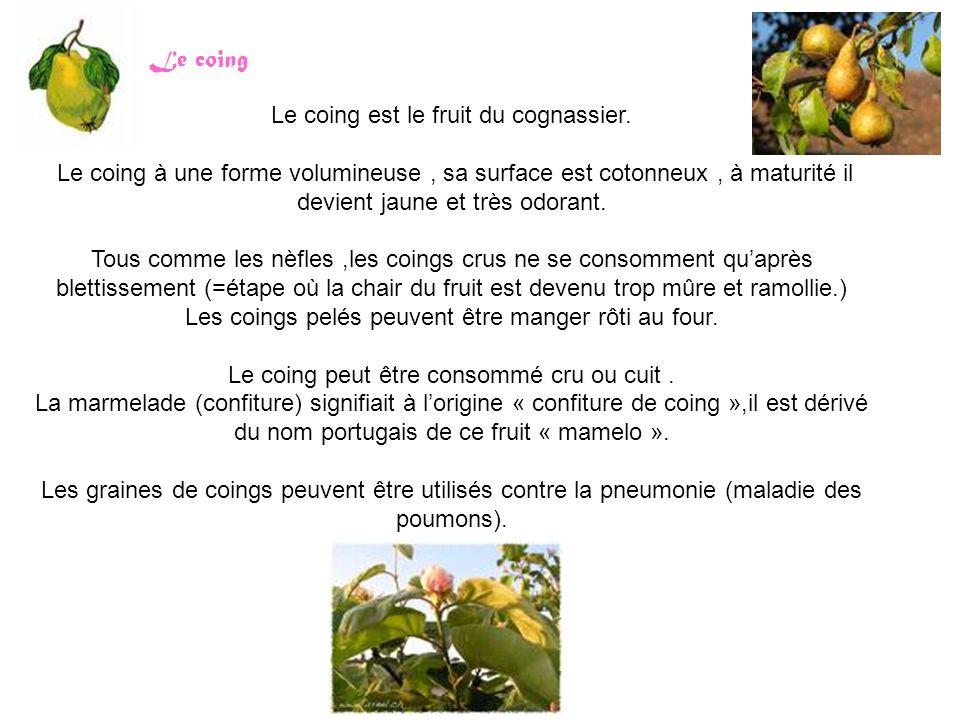 Le coing Le coing est le fruit du cognassier. Le coing à une forme volumineuse, sa surface est cotonneux, à maturité il devient jaune et très odorant.