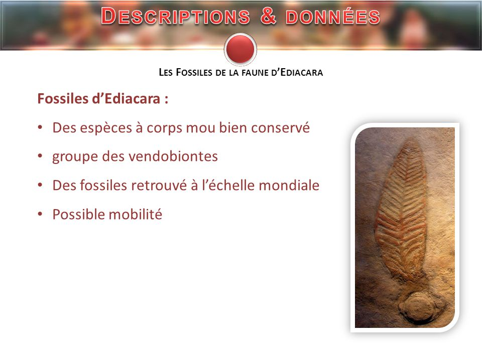 https://sites.google.com/site/svtblaye/cotten/ac2-0/4-2---biodiversite-et-environnement/4-2---les-faunes- du-passe/la-faune-d-ediacara http://webfossiles.free.fr/fossiles.htm http://www.geosci.monash.edu.au/precsite/docs/workshop/prato04/abstracts/fedonkin2.pdf http://www.ipgp.fr/pages/02150306.php http://www.britannica.com/EBchecked/topic/179126/Ediacara-fauna http://www.charnia.org.uk/newsletter/2007/discovery_charnia_2007.htm http://en.wikipedia.org/wiki/Spriggina S ITE I NTERNET
