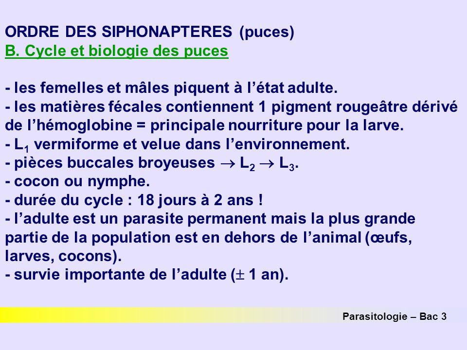 ORDRE DES SIPHONAPTERES (puces) B. Cycle et biologie des puces - les femelles et mâles piquent à l'état adulte. - les matières fécales contiennent 1 p