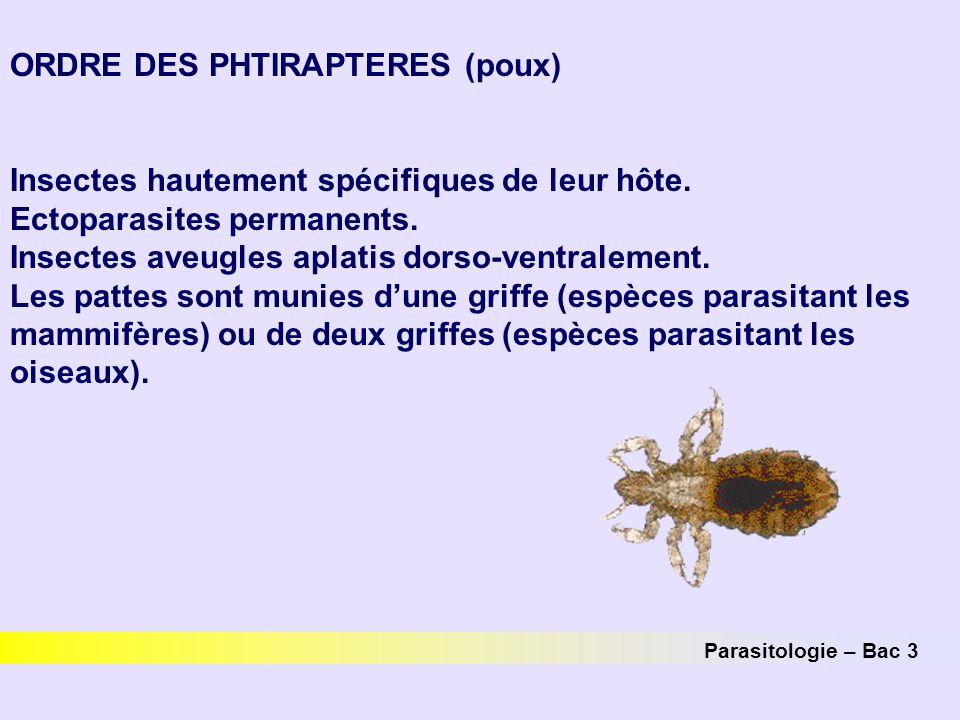 ORDRE DES PHTIRAPTERES (poux) Insectes hautement spécifiques de leur hôte. Ectoparasites permanents. Insectes aveugles aplatis dorso-ventralement. Les