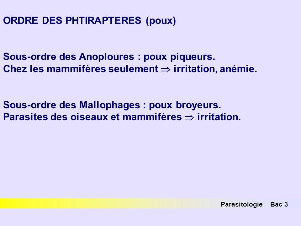 Parasitologie – Bac 3 ORDRE DES PHTIRAPTERES (poux) Sous-ordre des Anoploures : poux piqueurs. Chez les mammifères seulement  irritation, anémie. Sou