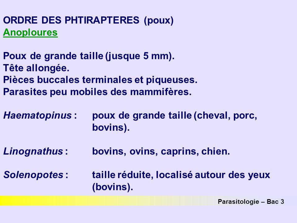 Parasitologie – Bac 3 ORDRE DES PHTIRAPTERES (poux) Anoploures Poux de grande taille (jusque 5 mm). Tête allongée. Pièces buccales terminales et pique