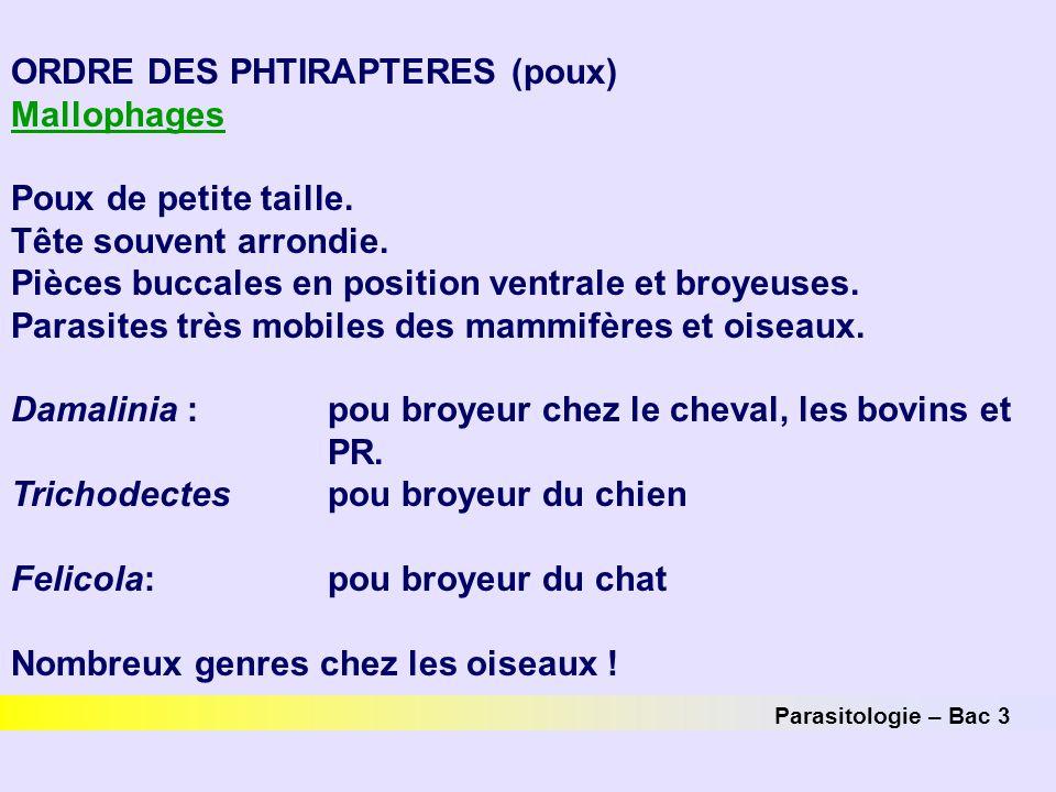 Parasitologie – Bac 3 ORDRE DES PHTIRAPTERES (poux) Mallophages Poux de petite taille. Tête souvent arrondie. Pièces buccales en position ventrale et