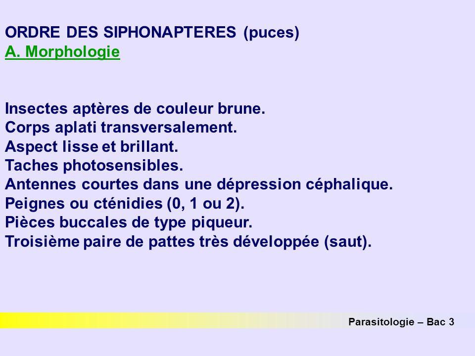 Parasitologie – Bac 3 ORDRE DES SIPHONAPTERES (puces) A. Morphologie Insectes aptères de couleur brune. Corps aplati transversalement. Aspect lisse et