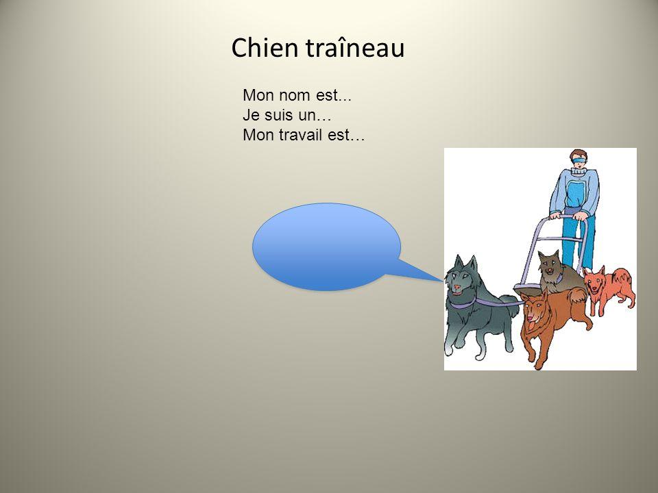 Chien de traîneau Le travail du chien de traîneau est de tirer des traîneaux sur de la neige ou de la glace au moyen de harnais et des lignes de trait