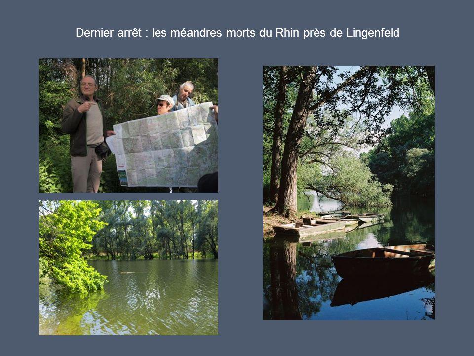 Dernier arrêt : les méandres morts du Rhin près de Lingenfeld
