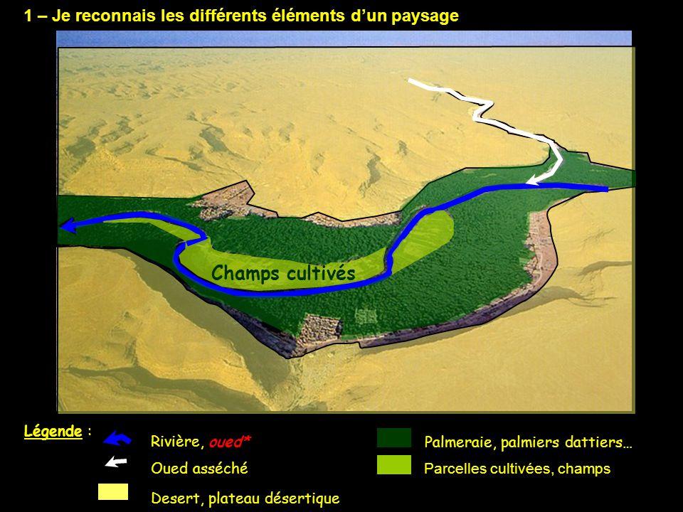 1 – Je reconnais les différents éléments d'un paysage Parcelles cultivées, champs Rivière, oued* Palmeraie, palmiers dattiers… Desert, plateau déserti