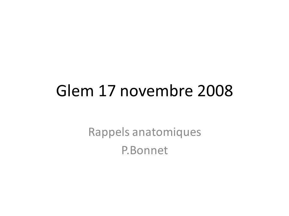 Glem 17 novembre 2008 Rappels anatomiques P.Bonnet
