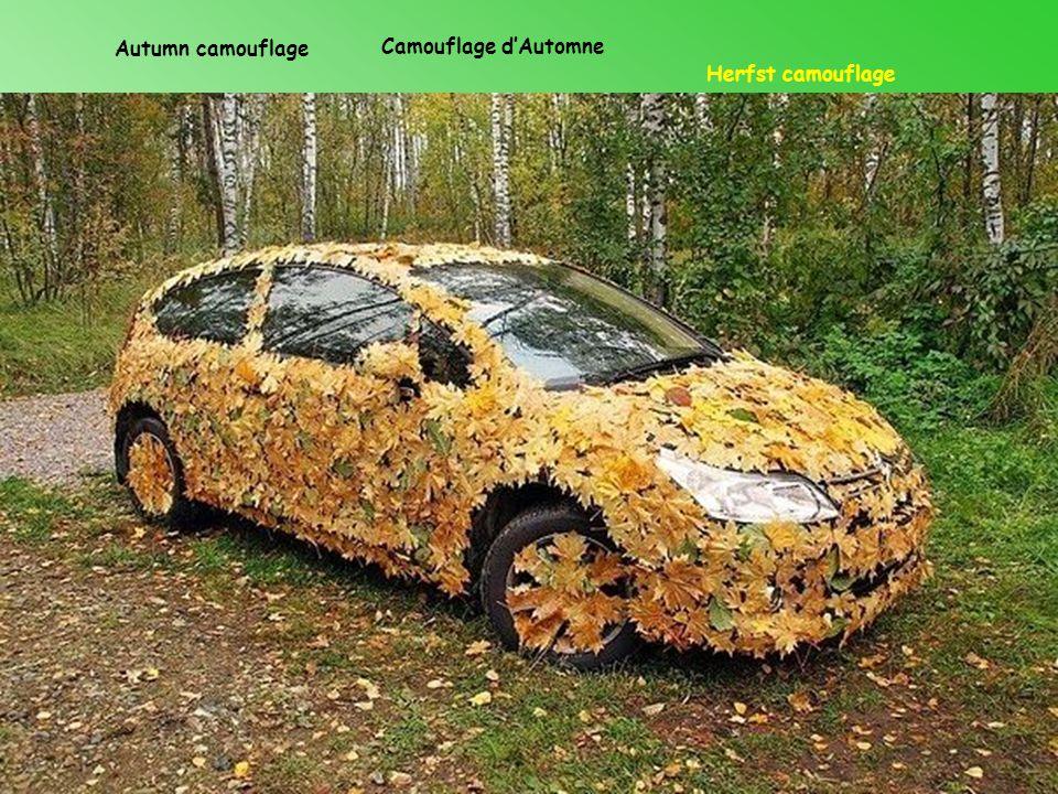 Autumn camouflage Camouflage d'Automne Herfst camouflage