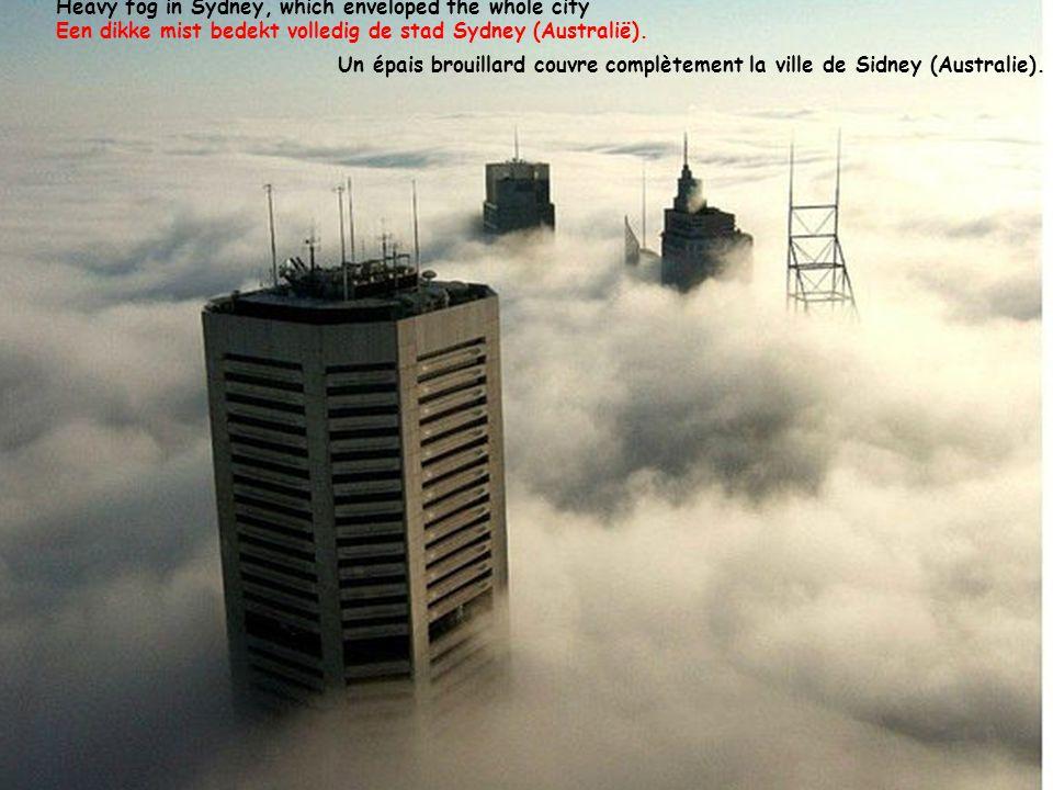 Heavy fog in Sydney, which enveloped the whole city Een dikke mist bedekt volledig de stad Sydney (Australië).