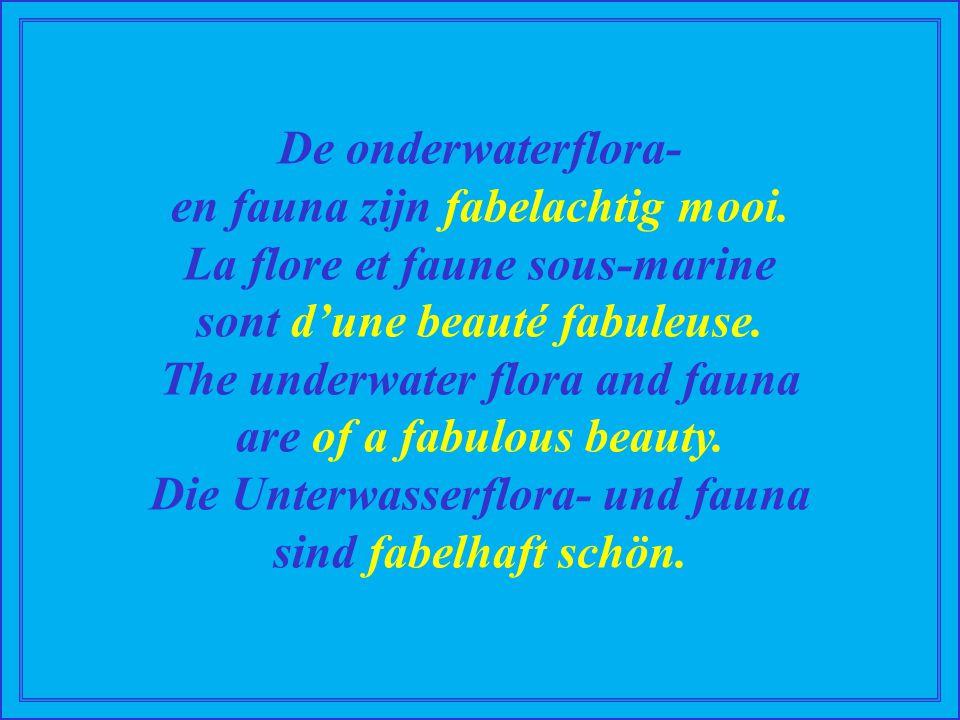 De onderwaterflora- en fauna zijn fabelachtig mooi.