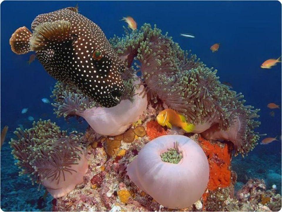 De onderwaterflora- en fauna zijn fabelachtig mooi. La flore et faune sous-marine sont d'une beauté fabuleuse. The underwater flora and fauna are of a