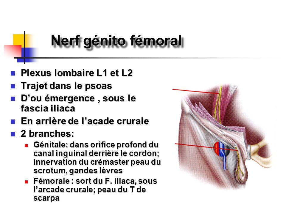 Nerf génito fémoral Plexus lombaire L1 et L2 Plexus lombaire L1 et L2 Trajet dans le psoas Trajet dans le psoas D'ou émergence, sous le fascia iliaca