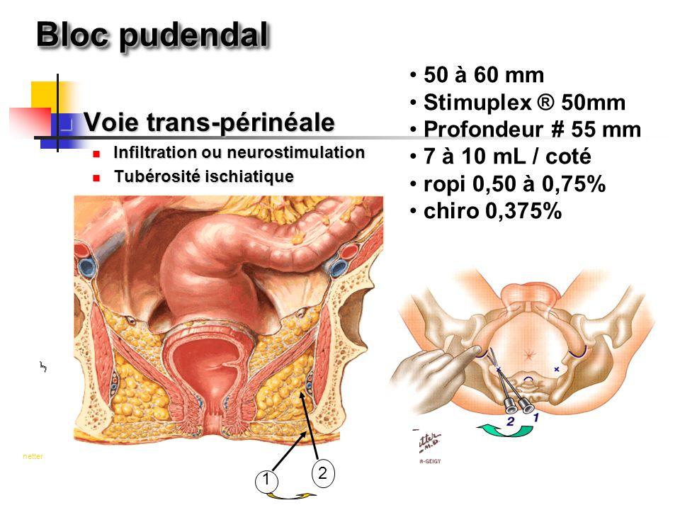 Bloc pudendal 1 2 netter 50 à 60 mm Stimuplex ® 50mm Profondeur # 55 mm 7 à 10 mL / coté ropi 0,50 à 0,75% chiro 0,375% Voie trans-périnéale Voie tran