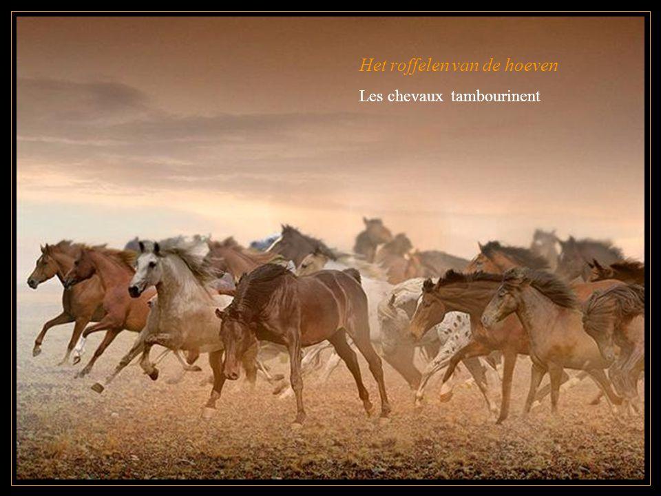 Het roffelen van de hoeven Les chevaux tambourinent