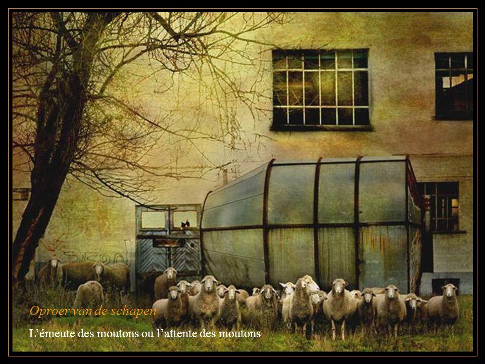 Oproer van de schapen L'émeute des moutons ou l'attente des moutons