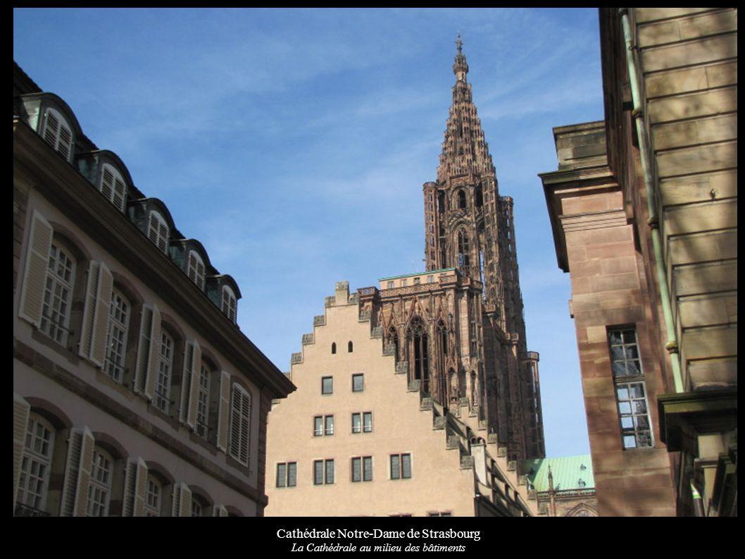 Cathédrale Notre-Dame de Strasbourg La Cathédrale au milieu des bâtiments