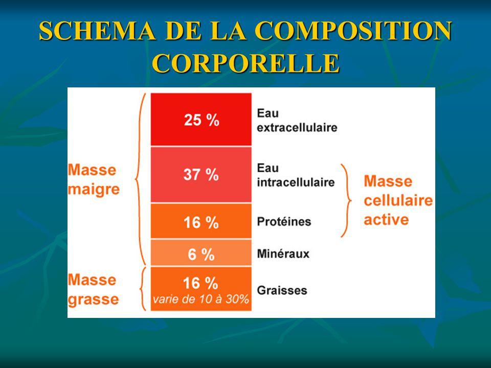SCHEMA DE LA COMPOSITION CORPORELLE