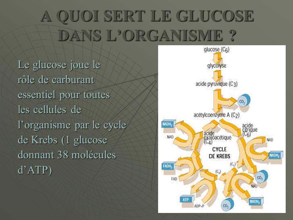 A QUOI SERT LE GLUCOSE DANS L'ORGANISME ? Le glucose joue le rôle de carburant essentiel pour toutes les cellules de l'organisme par le cycle de Krebs