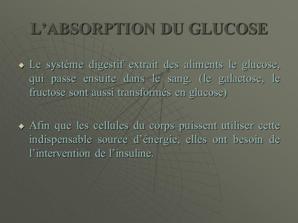 L'ABSORPTION DU GLUCOSE  Le système digestif extrait des aliments le glucose, qui passe ensuite dans le sang. (le galactose, le fructose sont aussi t