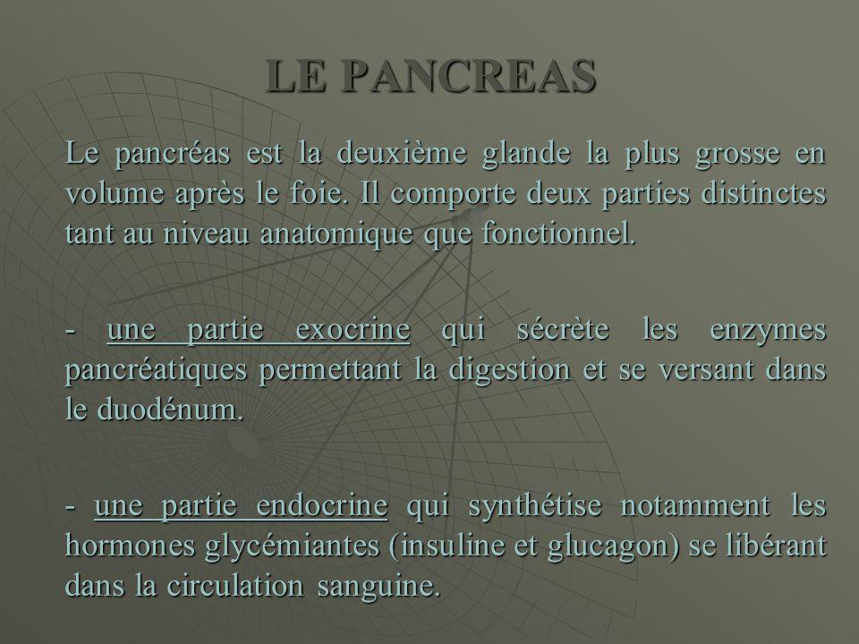 LE PANCREAS Le pancréas est la deuxième glande la plus grosse en volume après le foie. Il comporte deux parties distinctes tant au niveau anatomique q