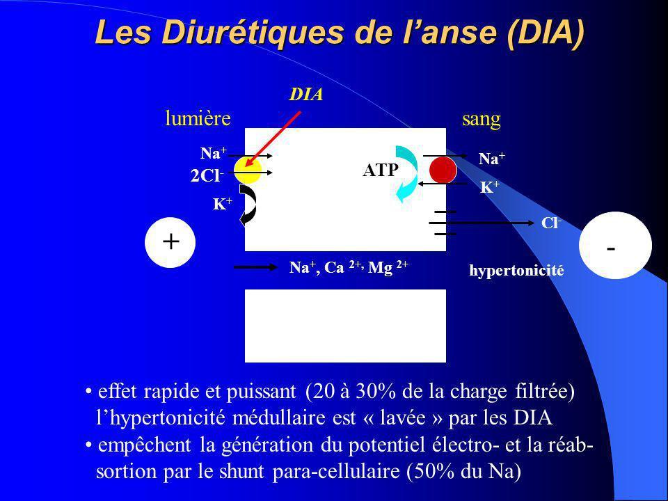 Les Diurétiques de l'anse (DIA) Na + K+K+ ATP lumièresang K+K+ Na + 2Cl - Cl - - + Na +, Ca 2+, Mg 2+ DIA effet rapide et puissant (20 à 30% de la cha
