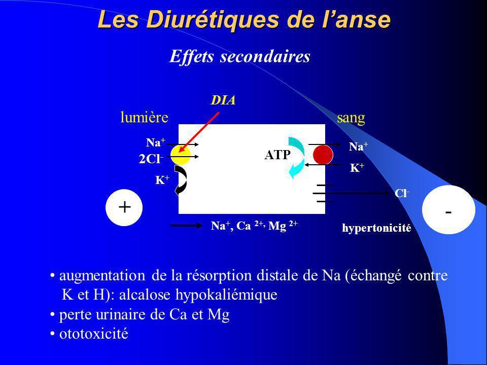 Les Diurétiques de l'anse Na + K+K+ ATP lumièresang K+K+ Na + 2Cl - Cl - - + Na +, Ca 2+, Mg 2+ DIA hypertonicité Effets secondaires augmentation de l