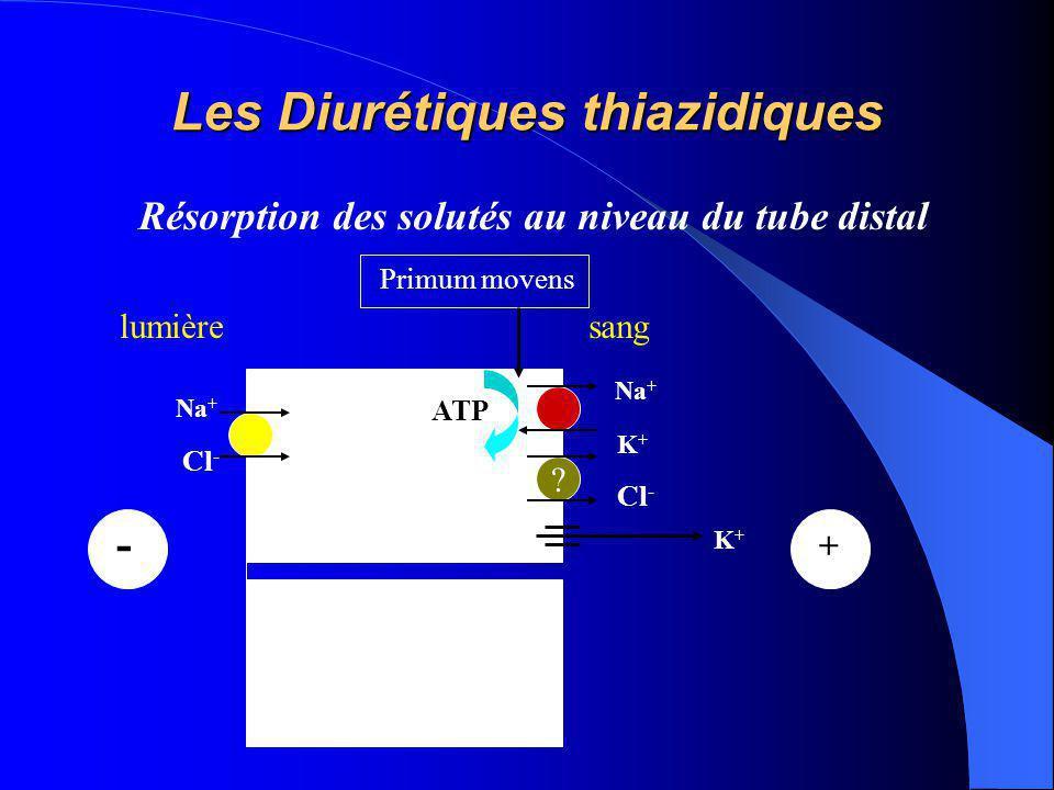 Les Diurétiques thiazidiques Résorption des solutés au niveau du tube distal Na + K+K+ ATP lumièresang Na + Cl - - ? K+K+ + Primum movens