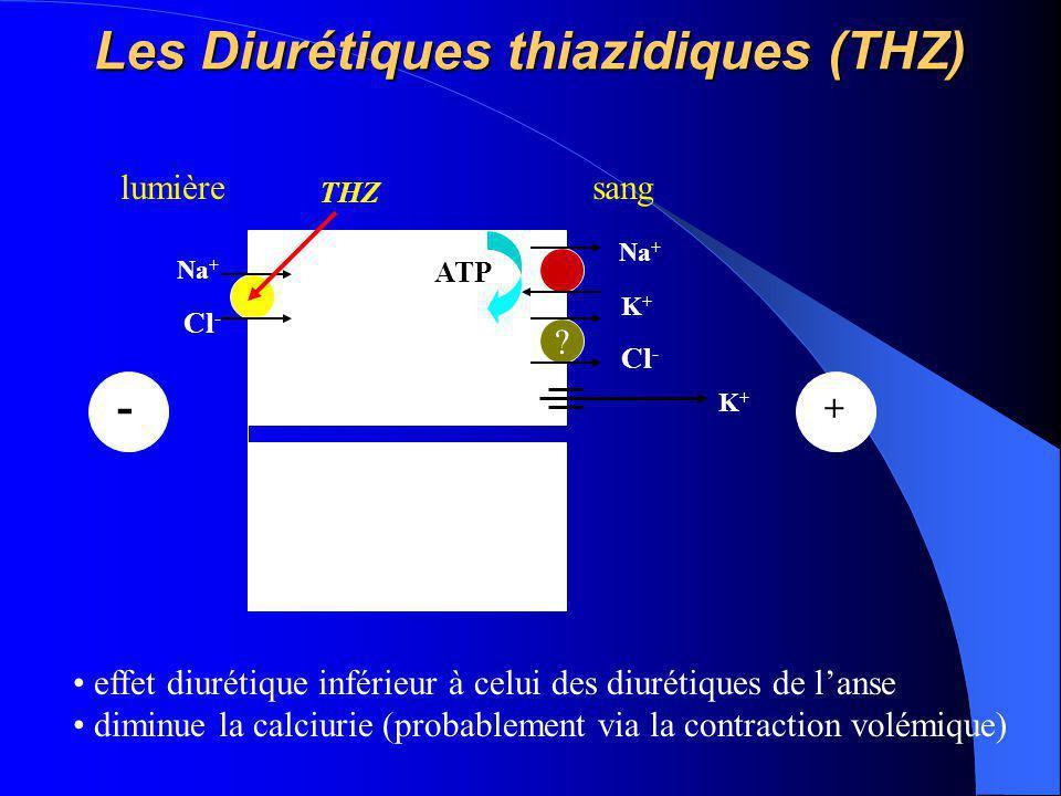 Les Diurétiques thiazidiques (THZ) Na + K+K+ ATP lumièresang Na + Cl - - ? K+K+ + THZ effet diurétique inférieur à celui des diurétiques de l'anse dim