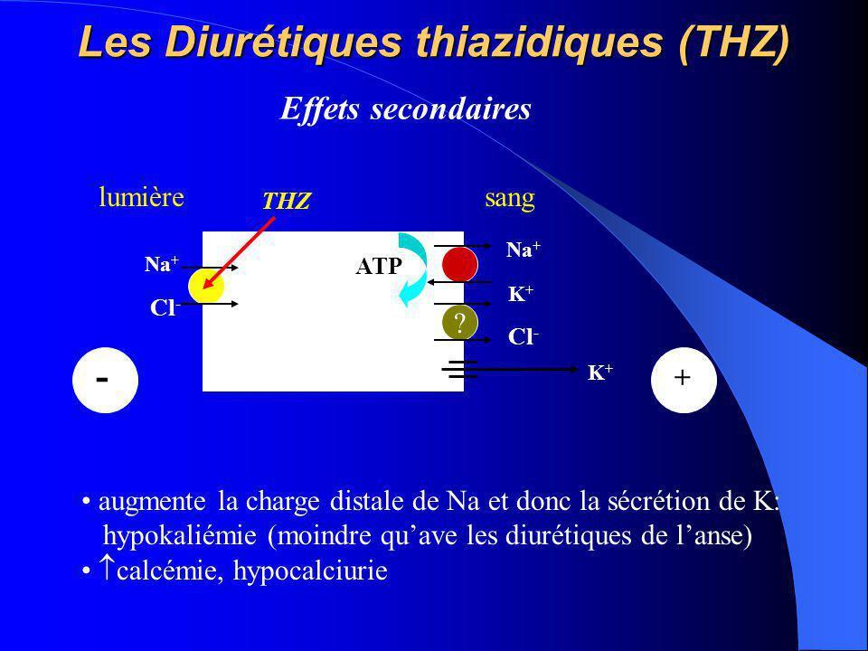 Les Diurétiques thiazidiques (THZ) Na + K+K+ ATP lumièresang Na + Cl - - ? K+K+ + THZ augmente la charge distale de Na et donc la sécrétion de K: hypo