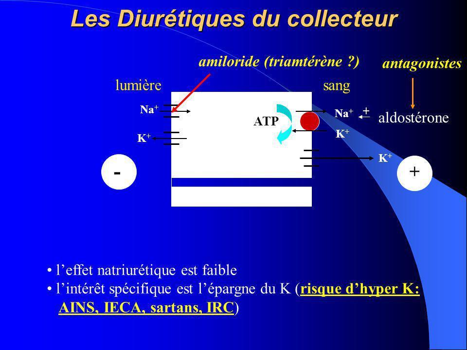 Les Diurétiques du collecteur Na + K+K+ ATP lumièresang K+K+ Na + K+K+ + - l'effet natriurétique est faible l'intérêt spécifique est l'épargne du K (r