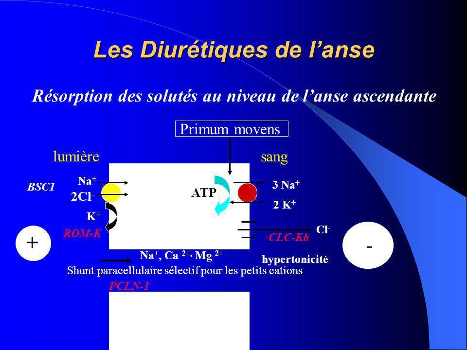 Les Diurétiques de l'anse Résorption des solutés au niveau de l'anse ascendante 3 Na + 2 K + ATP lumièresang K+K+ Na + 2Cl - Cl - - + Na +, Ca 2+, Mg