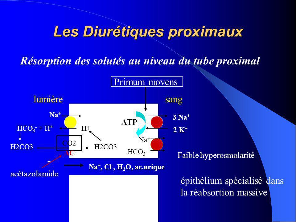 Les Diurétiques proximaux Résorption des solutés au niveau du tube proximal 3 Na + 2 K + ATP lumièresang Na + - Na +, Cl -, H 2 O, ac.urique Primum mo