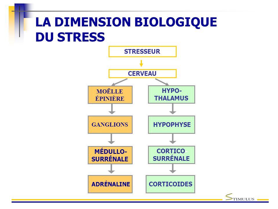 LA DIMENSION BIOLOGIQUE DU STRESS STRESSEUR CERVEAU MOËLLE ÉPINIÈRE MÉDULLO- SURRÉNALE ADRÉNALINE GANGLIONS HYPOPHYSE CORTICO- SURRÉNALE CORTICOIDES HYPO- THALAMUS