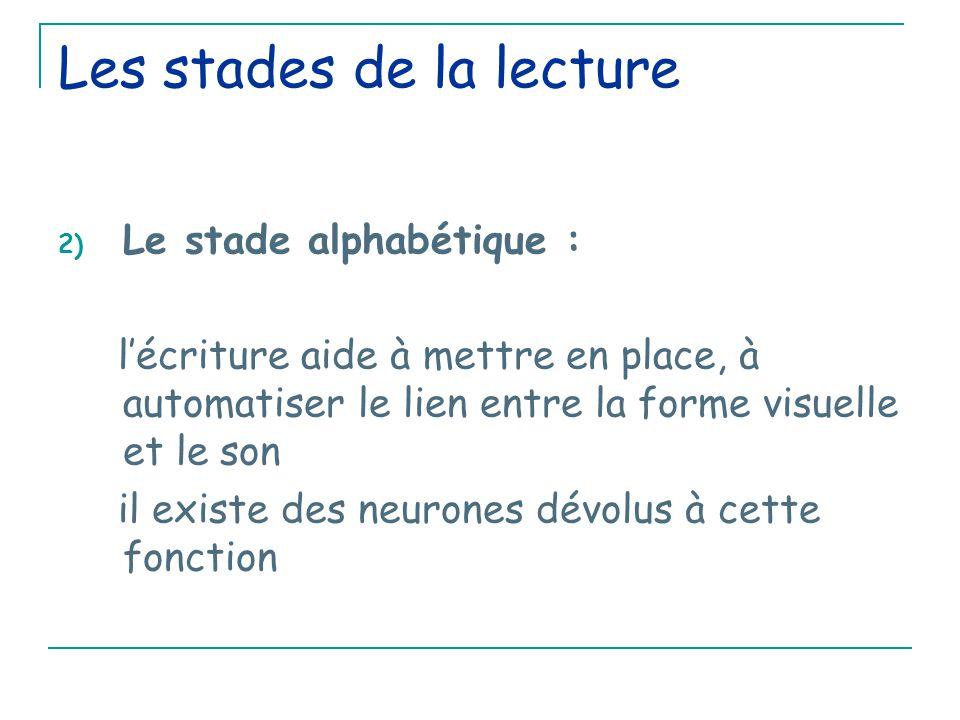 Les stades de la lecture 2) Le stade alphabétique : l'écriture aide à mettre en place, à automatiser le lien entre la forme visuelle et le son il existe des neurones dévolus à cette fonction