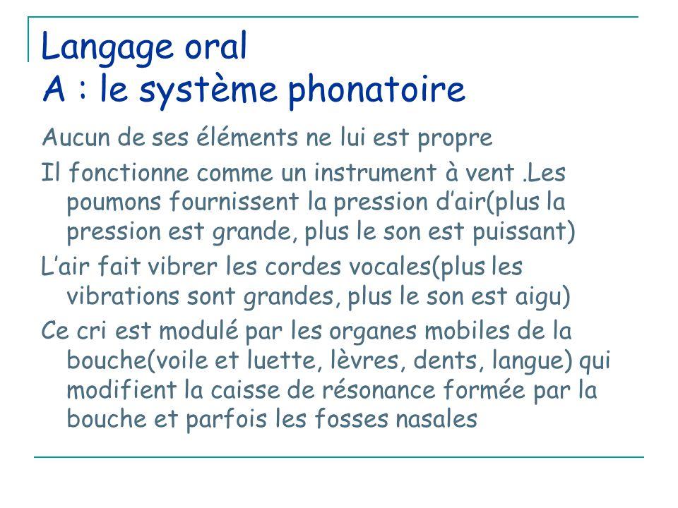 Langage oral A : le système phonatoire Aucun de ses éléments ne lui est propre Il fonctionne comme un instrument à vent.Les poumons fournissent la pression d'air(plus la pression est grande, plus le son est puissant) L'air fait vibrer les cordes vocales(plus les vibrations sont grandes, plus le son est aigu) Ce cri est modulé par les organes mobiles de la bouche(voile et luette, lèvres, dents, langue) qui modifient la caisse de résonance formée par la bouche et parfois les fosses nasales