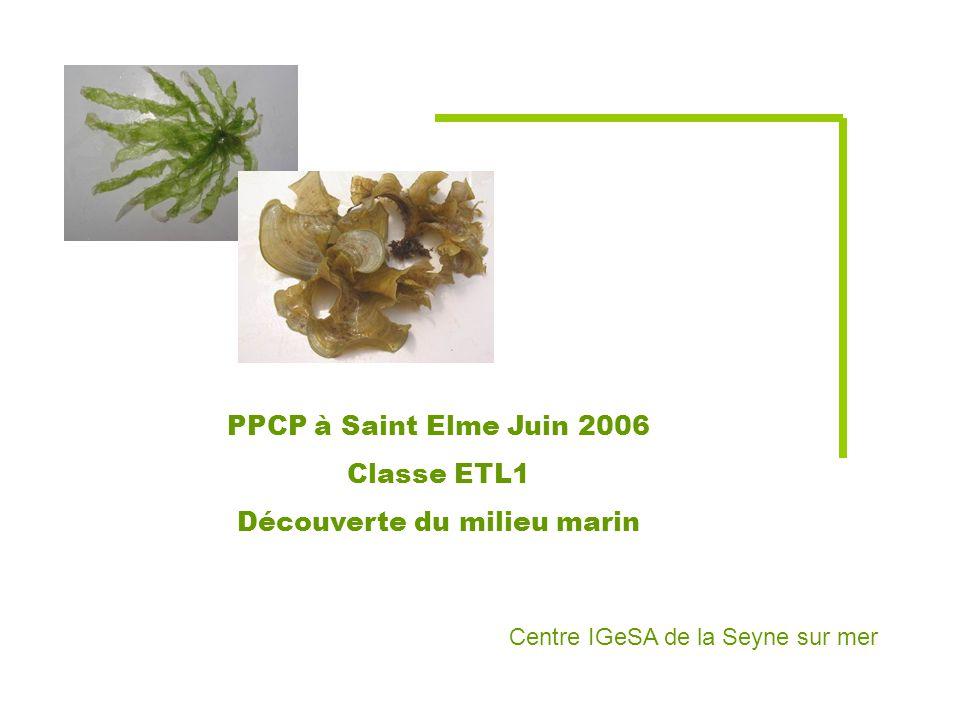 PPCP à Saint Elme Juin 2006 Classe ETL1 Découverte du milieu marin Centre IGeSA de la Seyne sur mer