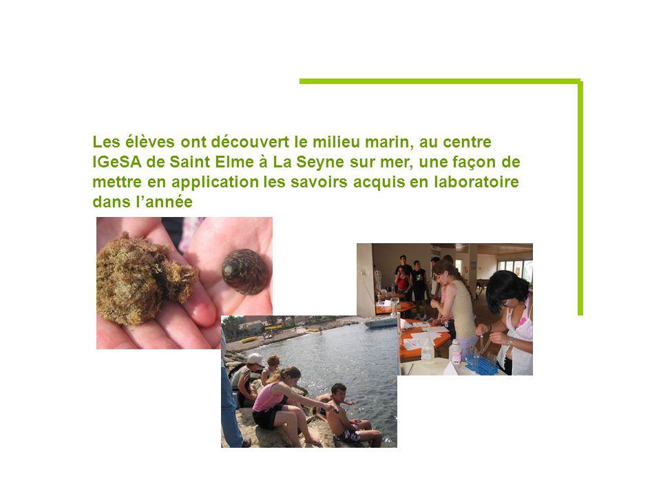 Les élèves ont découvert le milieu marin, au centre IGeSA de Saint Elme à La Seyne sur mer, une façon de mettre en application les savoirs acquis en laboratoire dans l'année