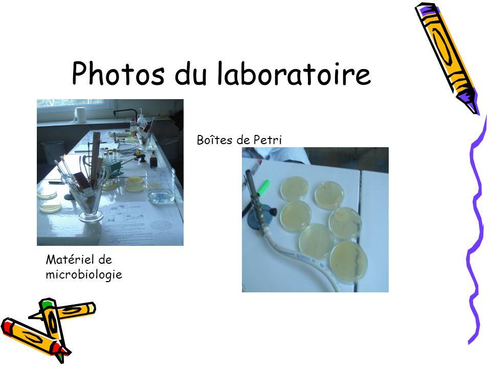Photos du laboratoire Matériel de microbiologie Boîtes de Petri