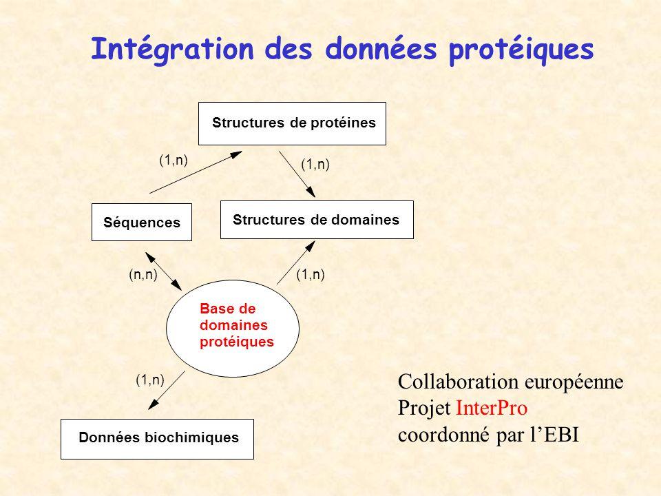 Intégration des données protéiques Base de domaines protéiques Séquences Structures de domaines Données biochimiques (n,n) (1,n) Structures de protéines (1,n) Collaboration européenne Projet InterPro coordonné par l'EBI