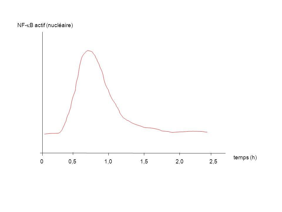 NF-  B actif (nucléaire) temps (h) 00,5 1,0 1,5 2,02,5