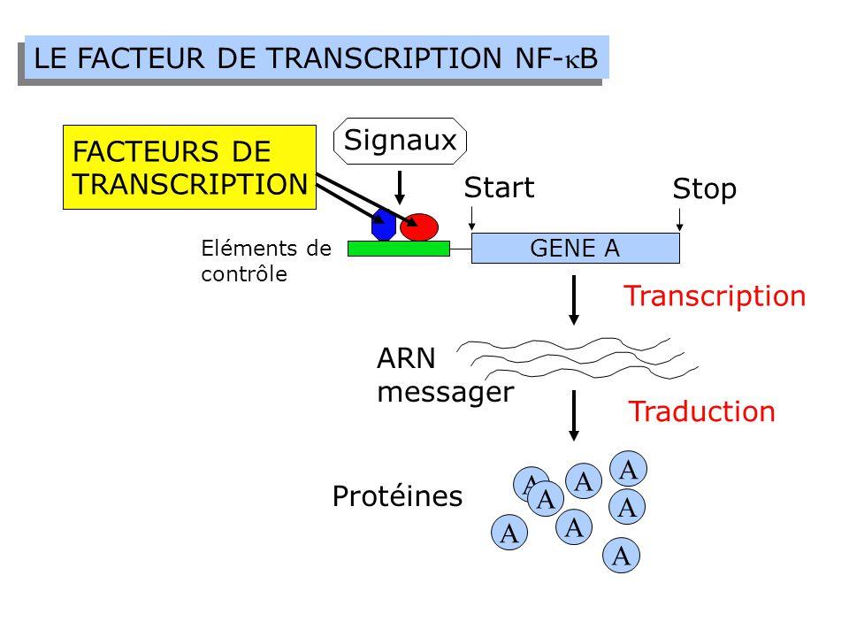 Rôles Biologiques du Facteur NF-B - Réponse immunitaire - Inflammations - Survie face aux stress (oxydoreductions, ionisations,…) - Traumatismes neurologiques, maladie d'Alzheimer, maladie de Parkinson, cancers, arthrites rhumatoïdes.