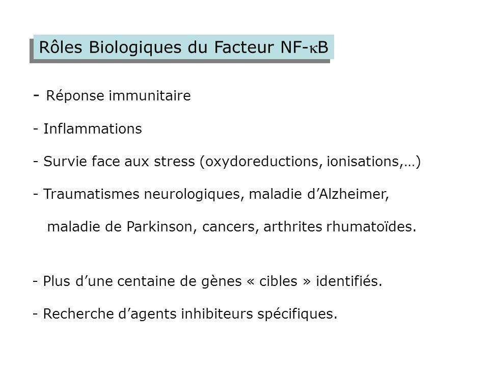 Rôles Biologiques du Facteur NF-B - Réponse immunitaire - Inflammations - Survie face aux stress (oxydoreductions, ionisations,…) - Traumatismes neur