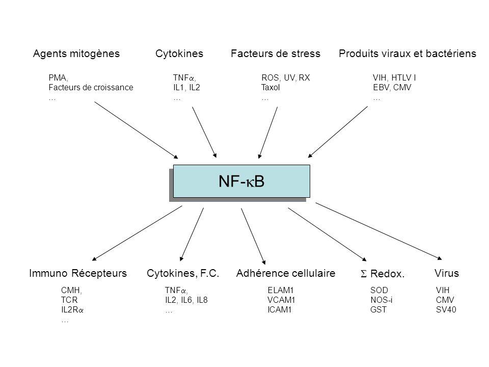 Agents mitogènesCytokinesProduits viraux et bactériensFacteurs de stress PMA, Facteurs de croissance … TNF , IL1, IL2 … VIH, HTLV I EBV, CMV … ROS, U