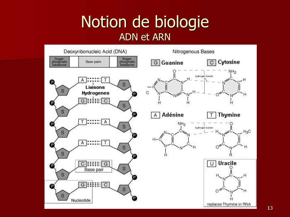 13 Notion de biologie ADN et ARN