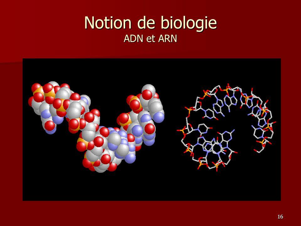 16 Notion de biologie ADN et ARN