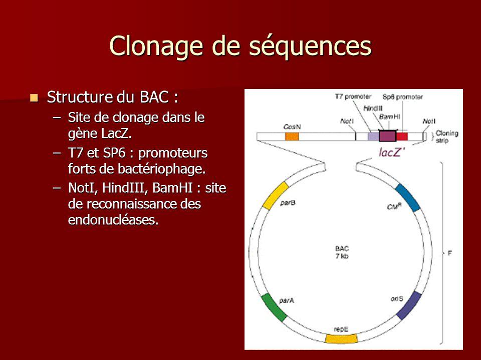 31 Clonage de séquences Structure du BAC : Structure du BAC : –Site de clonage dans le gène LacZ. –T7 et SP6 : promoteurs forts de bactériophage. –Not