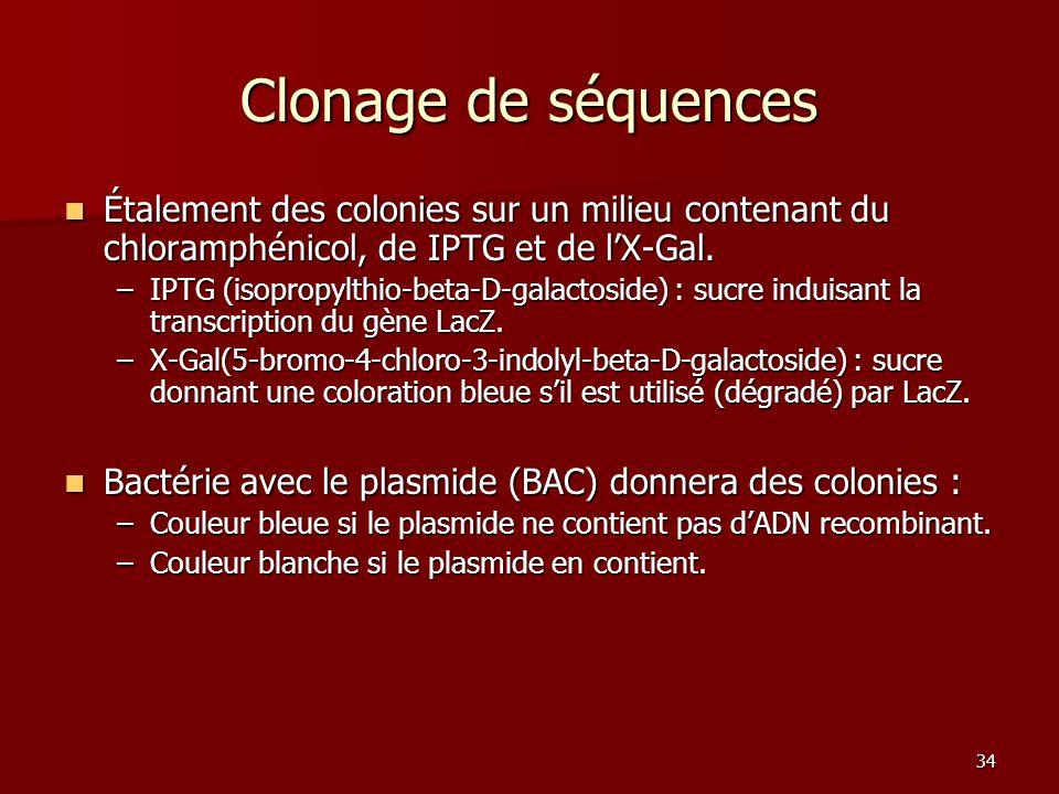 34 Clonage de séquences Étalement des colonies sur un milieu contenant du chloramphénicol, de IPTG et de l'X-Gal. Étalement des colonies sur un milieu