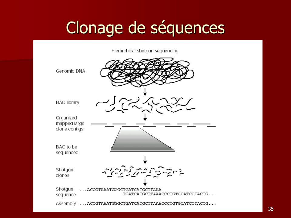 35 Clonage de séquences